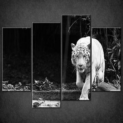 Wild Cat White Bengal Tiger Cascade Canvas Wall Art Print Picture Ready To Hang