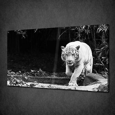 White Bengal Tiger Wild Cat Canvas Wall Art Print Picture Poster Ready To Hang