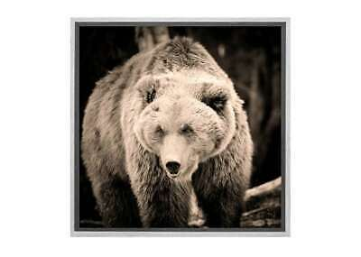 European Brown Bear | Canvas Wall Art Print Stretched Framed Picture Posters