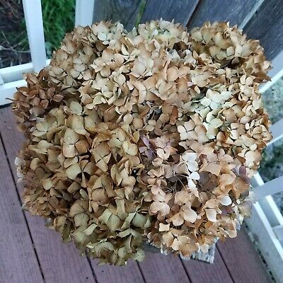 9 Dried Hydrangea Flowers Khaki Primi Greenish Brown Farmhouse Green DIY Crafts