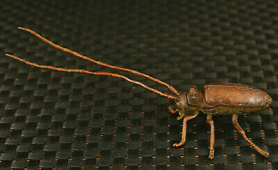 old chinese red bronze hand cast macrochaeta beetle statue decoration