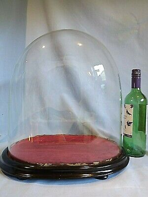 Large 19c Glass Clock/Taxidermy Dome.