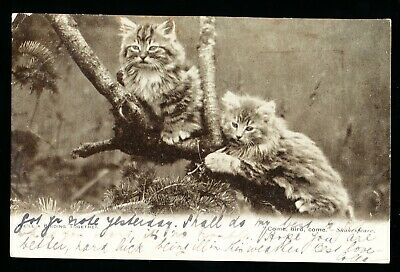 Used Postcard – Two Kittens – Shakespeare Quote (943)
