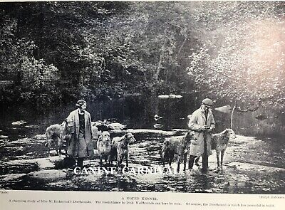 SCOTTISH DEERHOUND DOG  5 Dogs with Owners out in Nature 1934 VINTAGE ART PRINT