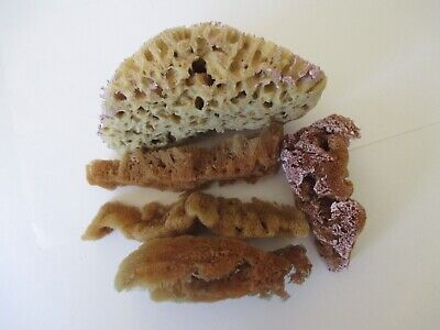 "Artist 6"" Natural Sea Sponges for Painting Crafts Lot of 5"
