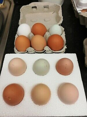 Half dozen mixed breed hen eggs for hatching/incubation ***to be sent 01/06***