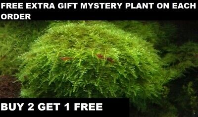 BUY 2 GET 1 FREE Live Aquarium Plant Aquatic Plants Christmas Moss planted tank