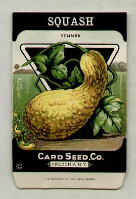 1920's LITHO CARD CO. SUMMER SQUASH SEED PACKET