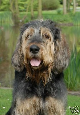 Otterhound 5 A6 Notelets/Blank Cards No 5 By Starprint - Auto combined postage