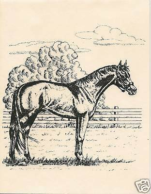 Thoroughbred Horse Notecards, 8 per Box with Envelopes