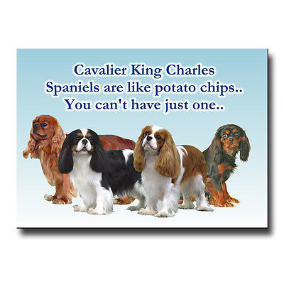 CAVALIER KING CHARLES SPANIEL Can't Have Just One MAGNET Steel