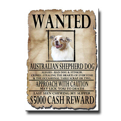 AUSTRALIAN SHEPHERD DOG Wanted Poster FRIDGE MAGNET No 2
