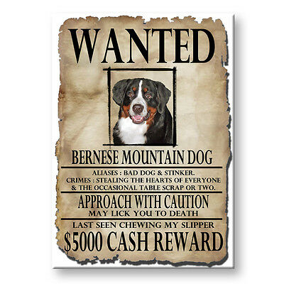 BERNESE MOUNTAIN DOG Wanted Poster FRIDGE MAGNET Berner