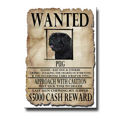 BLACK PUG Wanted Poster FRIDGE MAGNET New DOG Funny
