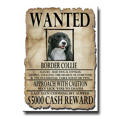 BORDER COLLIE Wanted Poster FRIDGE MAGNET New DOG!
