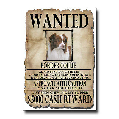 BORDER COLLIE Wanted Poster FRIDGE MAGNET No 2 R&W