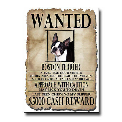 BOSTON TERRIER Wanted Poster FRIDGE MAGNET New DOG