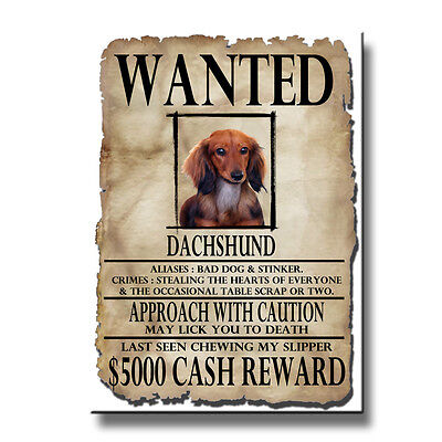 DACHSHUND Wanted Poster FRIDGE MAGNET No 4 Doxie DOG