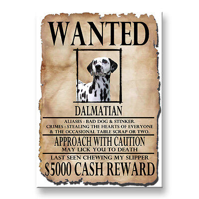 DALMATIAN Wanted Poster FRIDGE MAGNET New DOG
