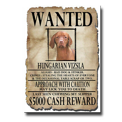HUNGARIAN VIZSLA Wanted Poster FRIDGE MAGNET New DOG