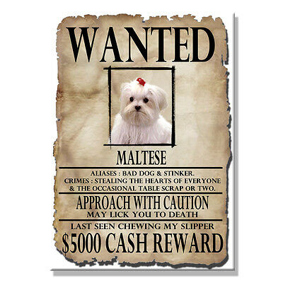 MALTESE Wanted Poster FRIDGE MAGNET New DOG