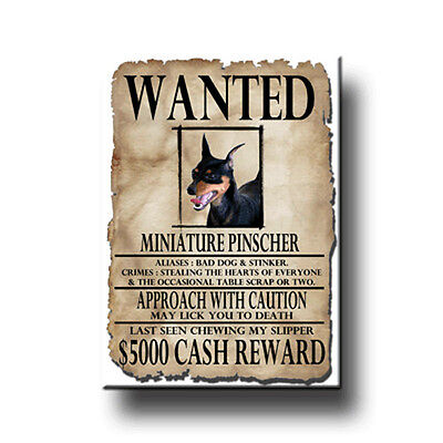 MINIATURE PINSCHER Wanted Poster FRIDGE MAGNET No2 DOG!