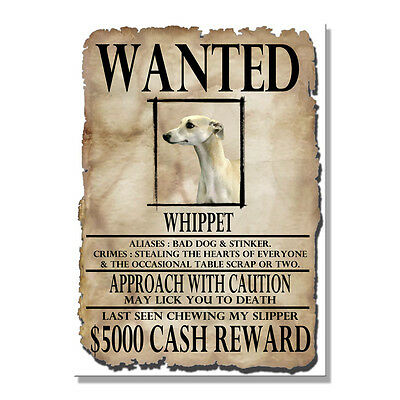 WHIPPET Wanted Poster FRIDGE MAGNET New DOG Funny