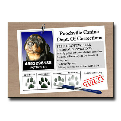 ROTTWEILER Rap Sheet FRIDGE MAGNET New DOG ROTTIE Funny