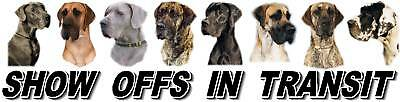 GREAT DANE Dog Show Off Car Sticker by Starprint