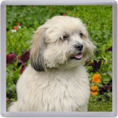Lhasa Apso Coaster No 4 by Starprint