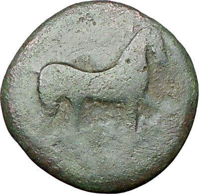 SALAPIA in APULIA Italy 300BC Horse & Dolphin  Ancient Greek Coin  i27455