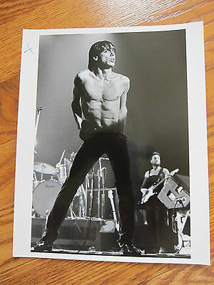 IGGY POP 1970s Professional Photo #5
