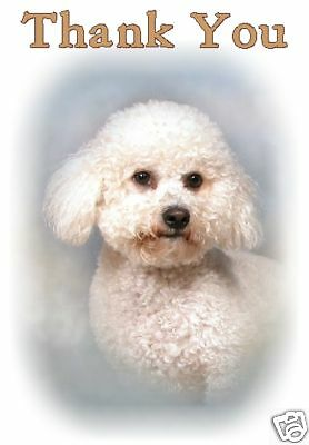 Bichon Frise Thank You Card By Starprint - No 1 - Auto combined postage