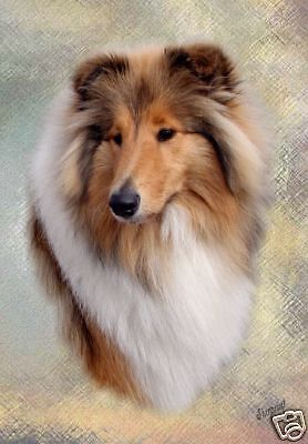 Rough Collie A6 Blank Card Design No 6 By Starprint - Auto combined postage