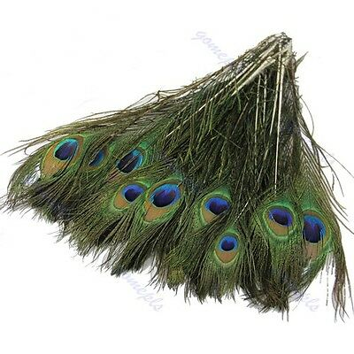 50pcs Beautiful Natural Peacock Tail Feathers About 10-12inch For DIY Decoration