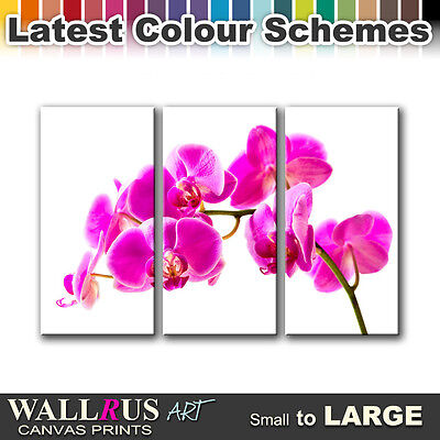 Orchids Flowers FLORAL  Canvas Print Framed Photo Picture Wall Artwork WA