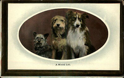 Dogs Collie & Terriers Oval Border c1910 Old Postcard