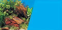 Plants With Rock Background Backing  Aquariums & Tank