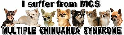 """I Suffer from MULTIPLE  CHIHUAHUA  SYNDROME"" Dog Car Sticker by Starprint"