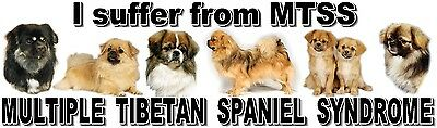 """""""I Suffer from MULTIPLE  TIBETAN SPANIEL  SYNDROME"""" Dog Car Sticker by Starprint"""