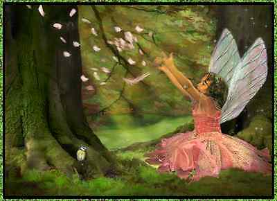 The Forest Fairy Child Store Front Header Package