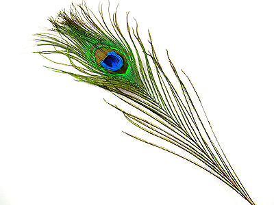 Peacock Eye Feathers, 3 Per Pack, Approximately 25cm Long