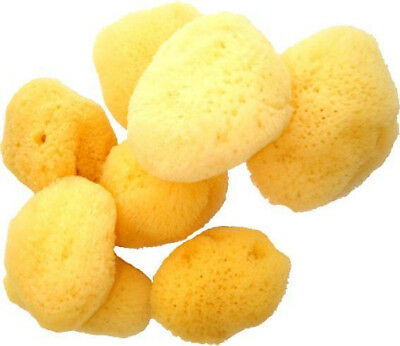 Set of 4 Premium Natural Greek Sea Sponges Baby Bath Artists make up 2'' - 3''