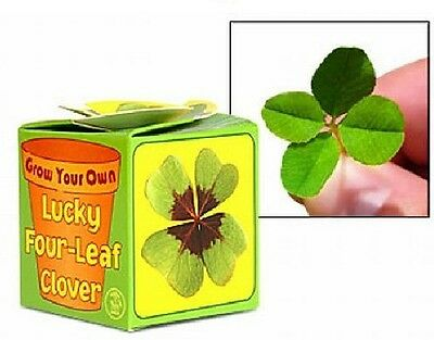 Grow Your Own Lucky Irish Ireland Shamrock Four Leaf Clover 08921