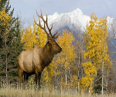 Rocky Mountain Bull Elk  Image Home Or Office Decor Computer Mouse Pad 9 X 7