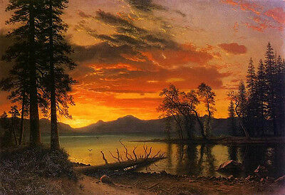 "Oil painting nice landscape trees Evergreen by river in sunset canvas 24""x36"""