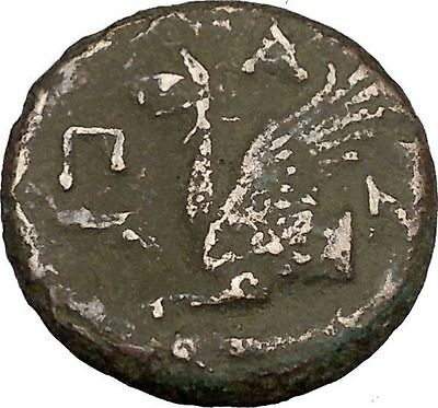 PANTIKAPAION in TAURIC CHERSONESOS 400BC Pan Griffin Fish Greek Coin i38354