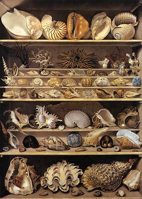 Oil Alexandre-Isidore LEROY DE BARDE - Selection of Shells Arranged on Shelves