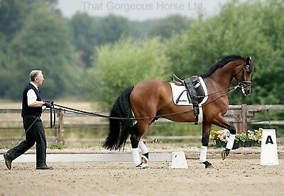 Scan Horse Double Lunge Line Long Reins 16m or 18m Continental Grip & Cord