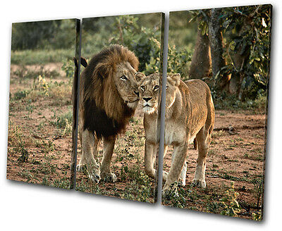Animals lions South Africa  TREBLE CANVAS WALL ART Picture Print VA